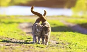 Meaning of Cat and Dog Tail Movement