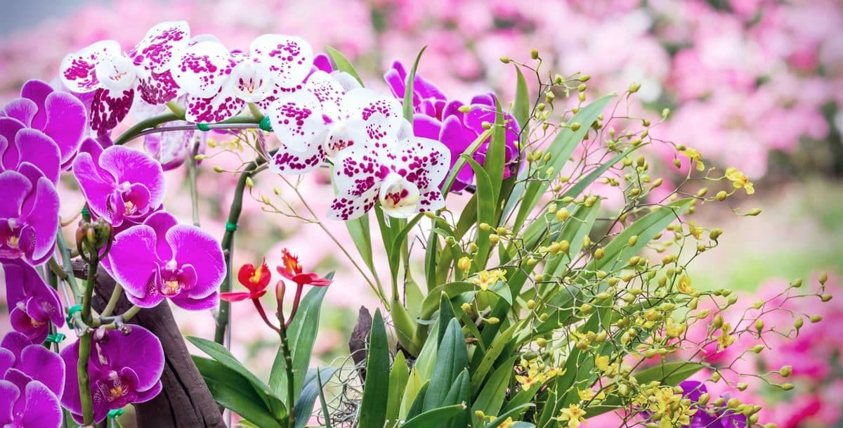 Types of Ornamental Plants Orchids