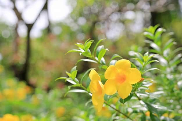 Ornamental Plants Of Your Natural Flowers