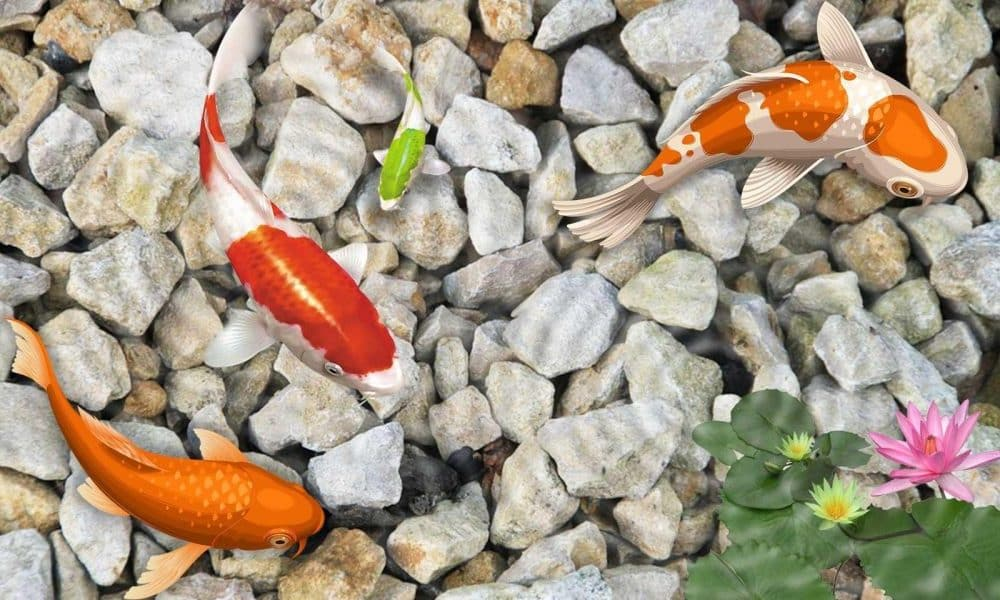 Types of Koi Fish That Are Much Sought After