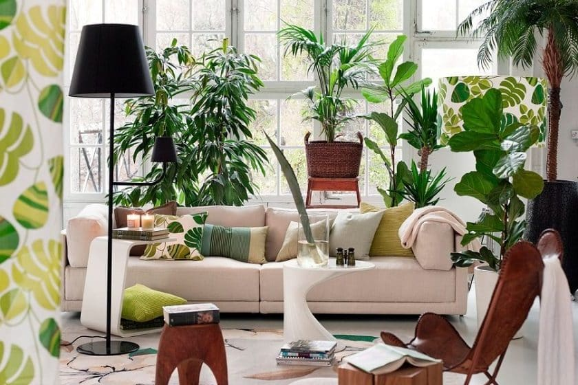 Suitable House Room Decorated With Plants