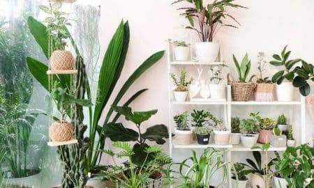Planting Media For PotTed Plants